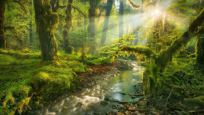 garden-spirit-creek-sun-rays-morning-view-706x400-wallpaper.jpg